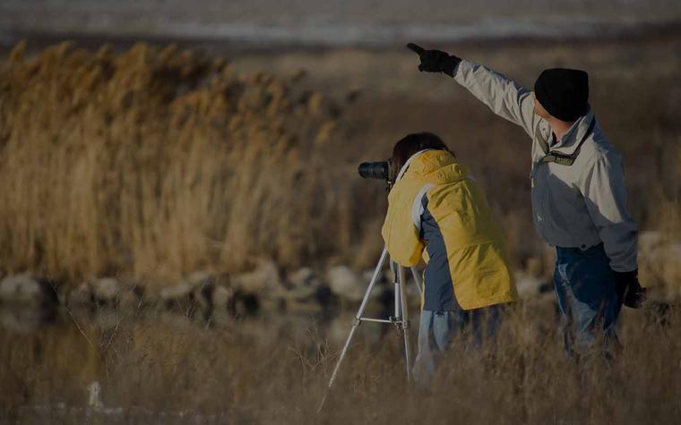 bird-watching-gradient-image