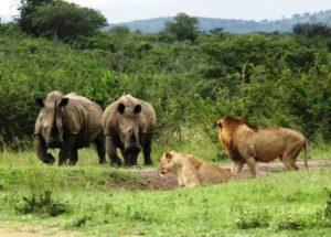 hluhluwe_imfolozi_tours_safaris