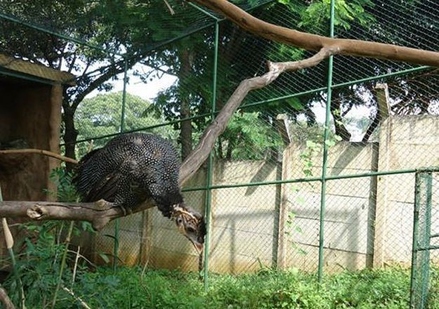 durban's mitchell park zoo
